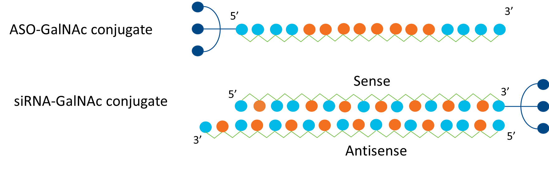 Structure Of Givosiran
