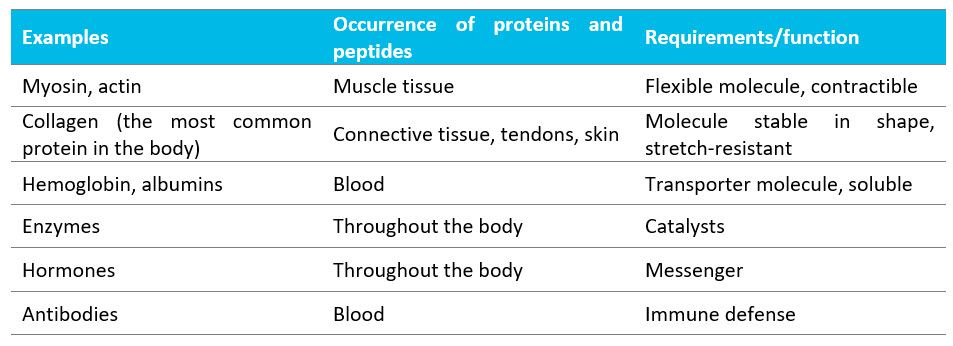 Table displaying endogenous proteins and their functions