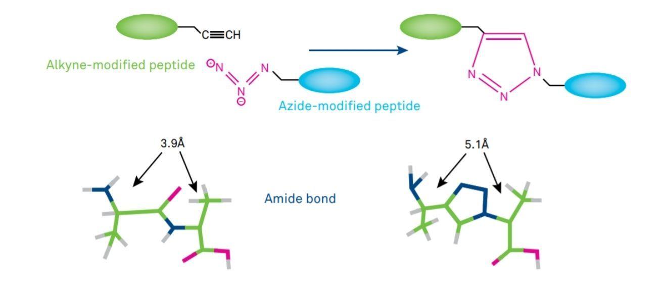 Figure 1 Click Chemistry