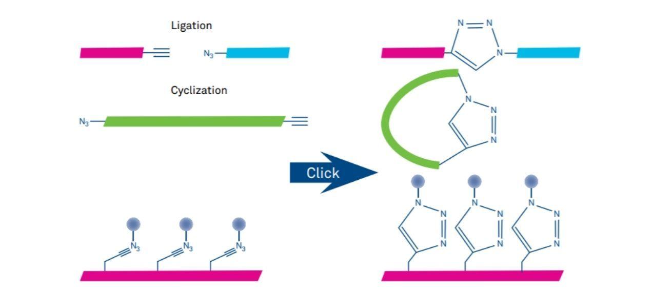 Figure 2 Click Chemistry