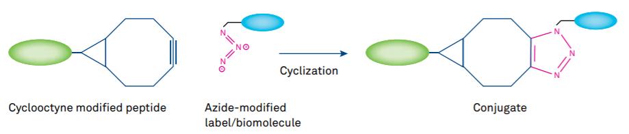 Figure 3 Click Chemistry